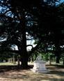 Chiswick House & Gardens 3